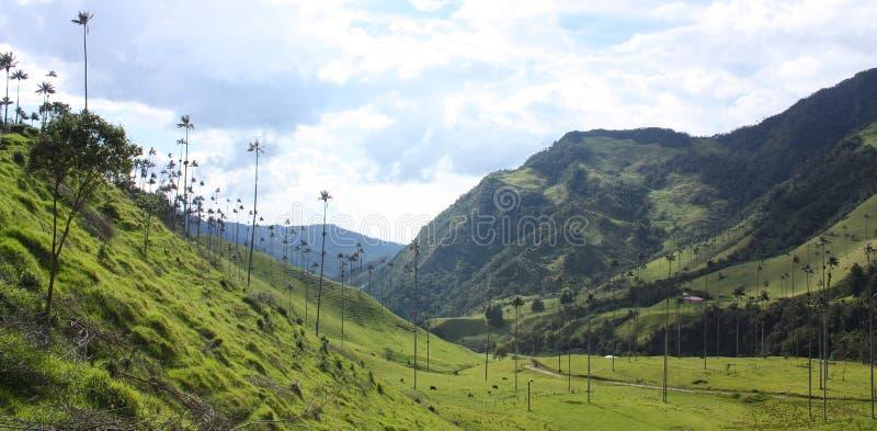 O vale do cocora, Colômbia imagens de stock royalty free