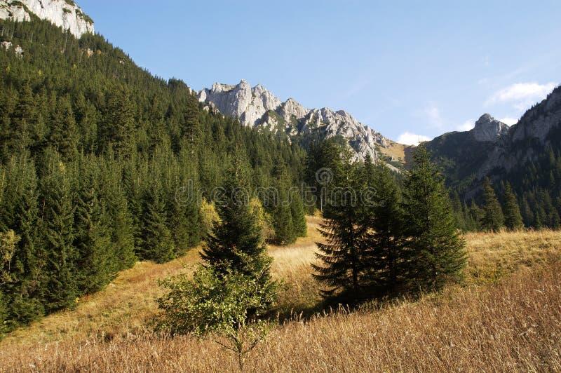 O vale Koscieliska 3. imagem de stock