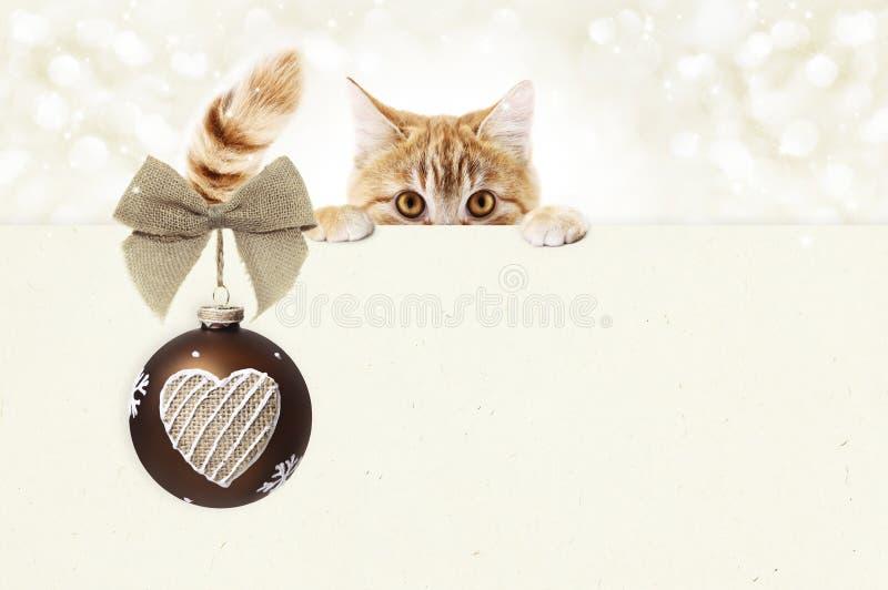 O vale-oferta do gato do gengibre do Natal com a fita vermelha da bola e da juta curva-se imagens de stock