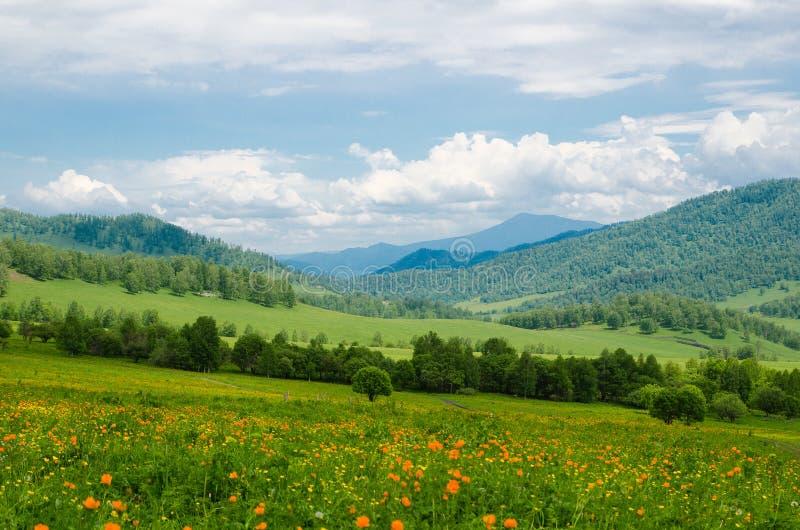 O vale verde alto nas montanhas à vista do céu claro no dia de verão spangled com paisagem de florescência do verão das flores, A foto de stock royalty free