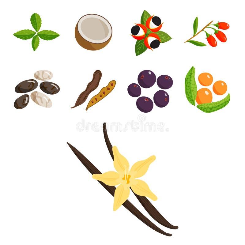 O vegetal do alimento do vegetariano e o restaurante saudáveis dos frutos tornam côncavo o vetor da baga dos desenhos animados ilustração royalty free
