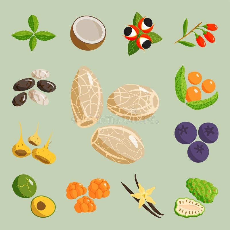 O vegetal do alimento do vegetariano e o restaurante saudáveis dos frutos tornam côncavo o vetor da baga dos desenhos animados ilustração stock