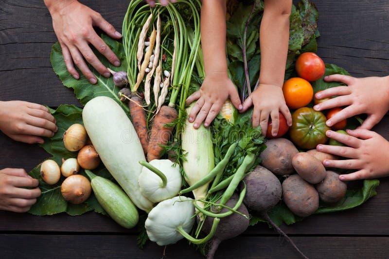 O vegetal orgânico, fazendeiros colhe o alimento do campo da natureza imagens de stock royalty free