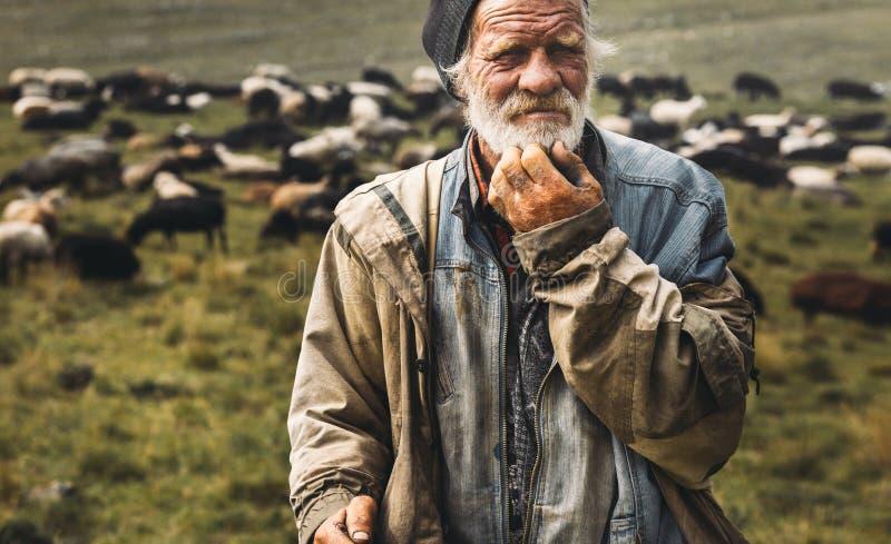 O velho pastor está olhando para a câmera no fundo do rebanho Conceito profissional de retrato do agricultor fotos de stock