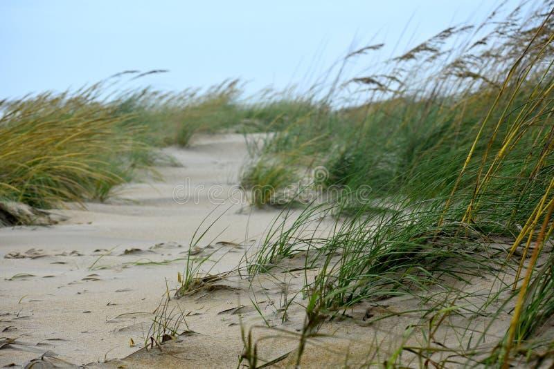 O vento varreu a grama do mar com céu azul fotos de stock royalty free