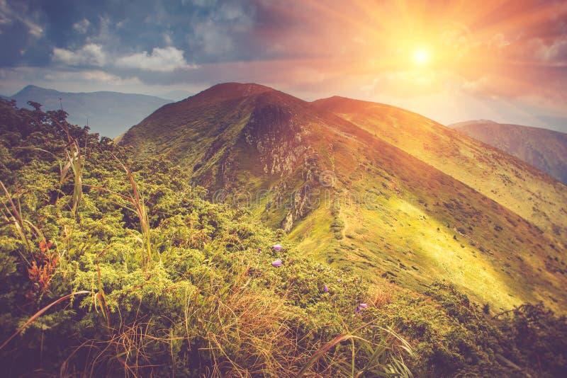 O verão bonito floresce nas montanhas, incandescendo pela luz solar foto de stock royalty free