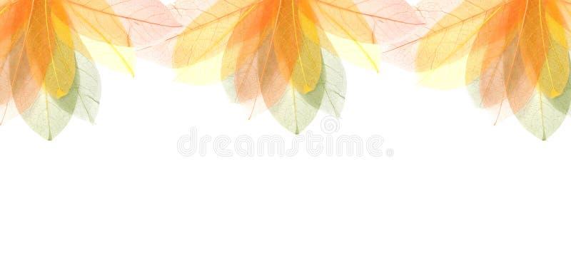 O verão colorido transparente deixa o frame imagens de stock