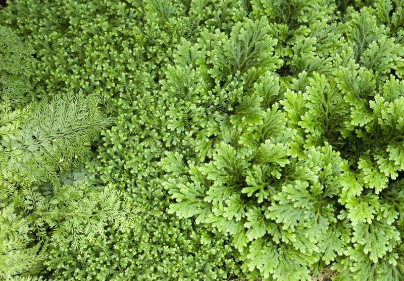 O verde abstrato deixa o fundo fotos de stock