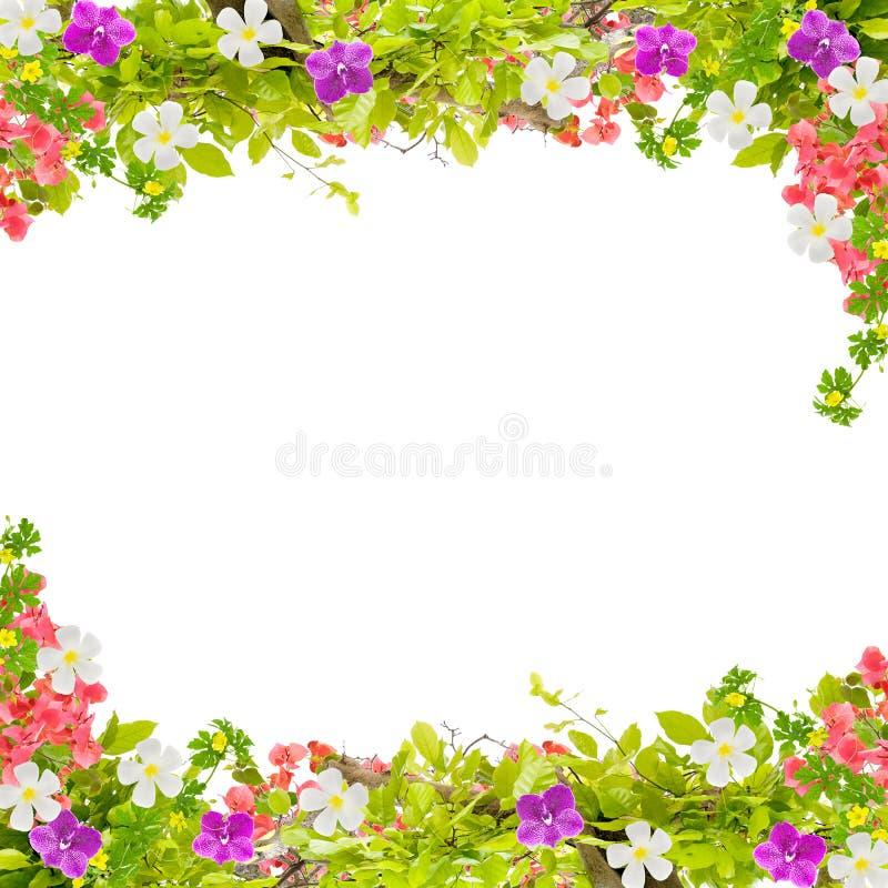 O verde bonito deixa o quadro com a flor no fundo branco fotos de stock