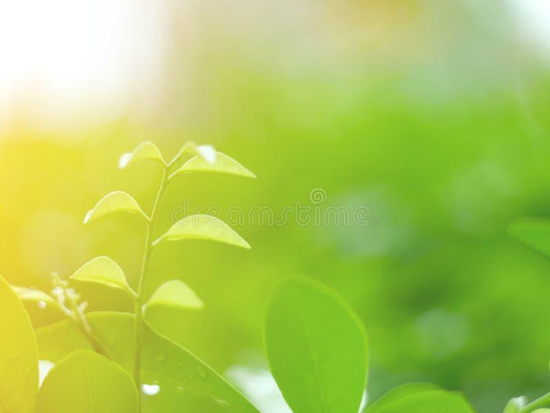 O verde bonito folheia fundo e textura abstrata para o papel de parede e calmo imagem de stock royalty free