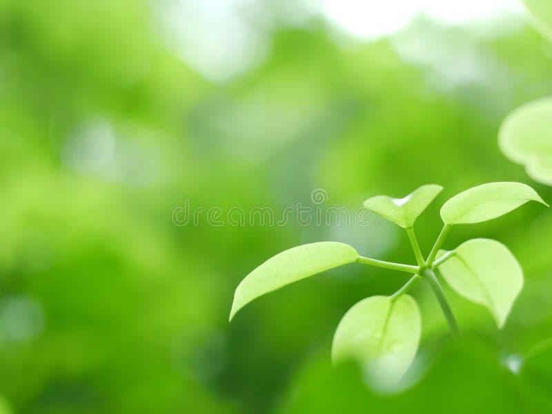 O verde bonito folheia fundo no parque e na textura abstrata para o papel de parede e calmo fotografia de stock