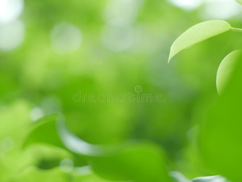 O verde bonito folheia fundo no parque e na textura abstrata para o papel de parede e calmo imagens de stock