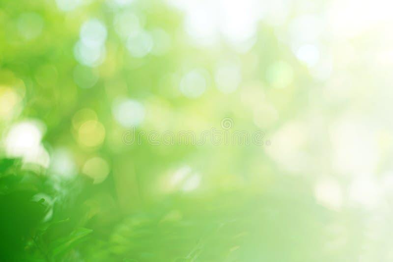 O verde borrado delicado deixa o fundo imagens de stock royalty free