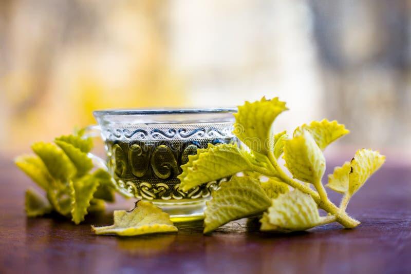 O verde coloriu benéfico e ayurvedic e tisana das folhas do Carom ou a erva daninha do bispo ou ajwain em um copo transparente co imagens de stock