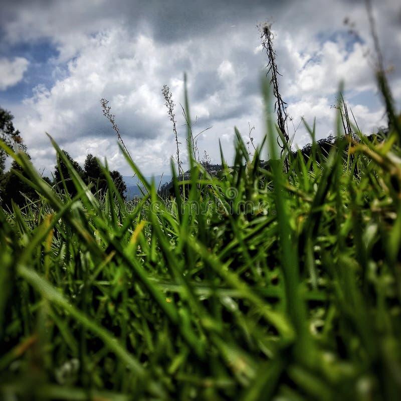O verde da luxúria fotografia de stock