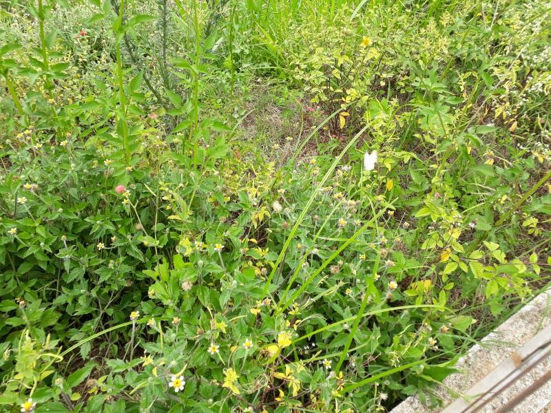 O verde da natureza do verde do borboleta de Natureza flores floresce o ar livre imagem de stock royalty free