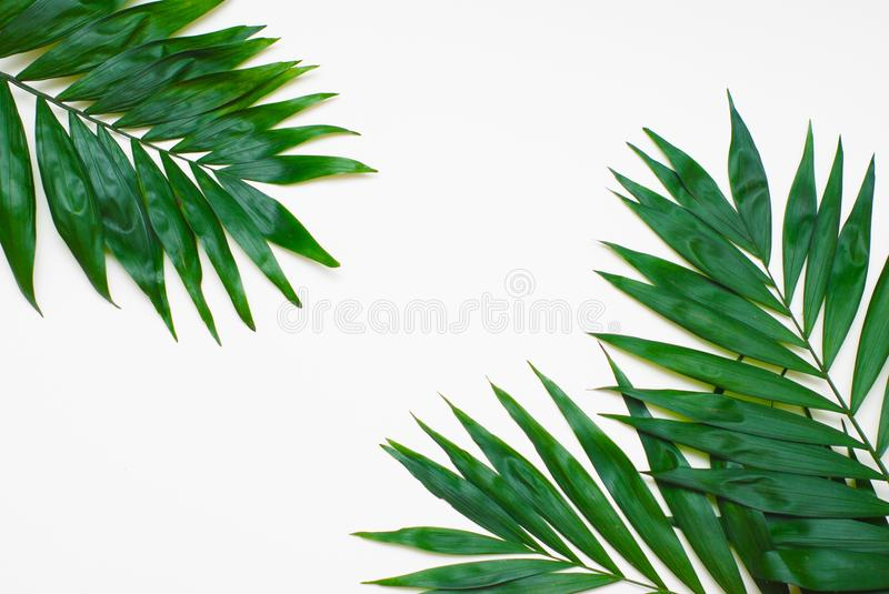 O verde da palma deixa a árvore exótica tropical Isoalted no fundo branco Holliday Patern Template fotos de stock