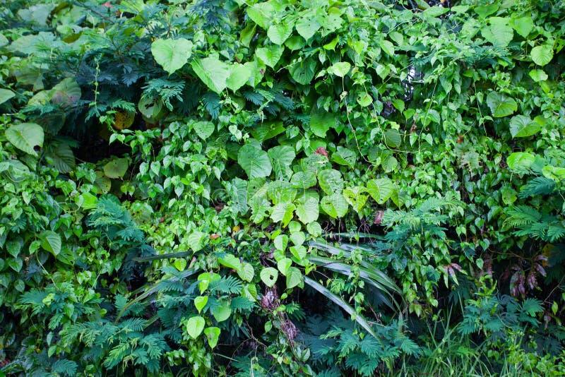 O verde da selva deixa o fundo do verão em tons exóticos fotos de stock royalty free
