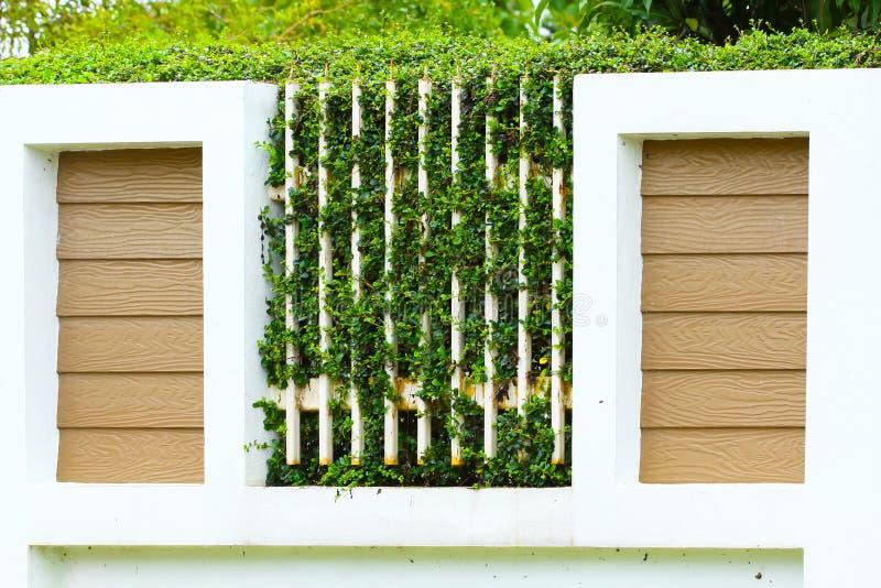 O verde deixa as samambaias na parede, paredes velhas com natureza Textura ou fundo para o papel da apresentação fotografia de stock royalty free