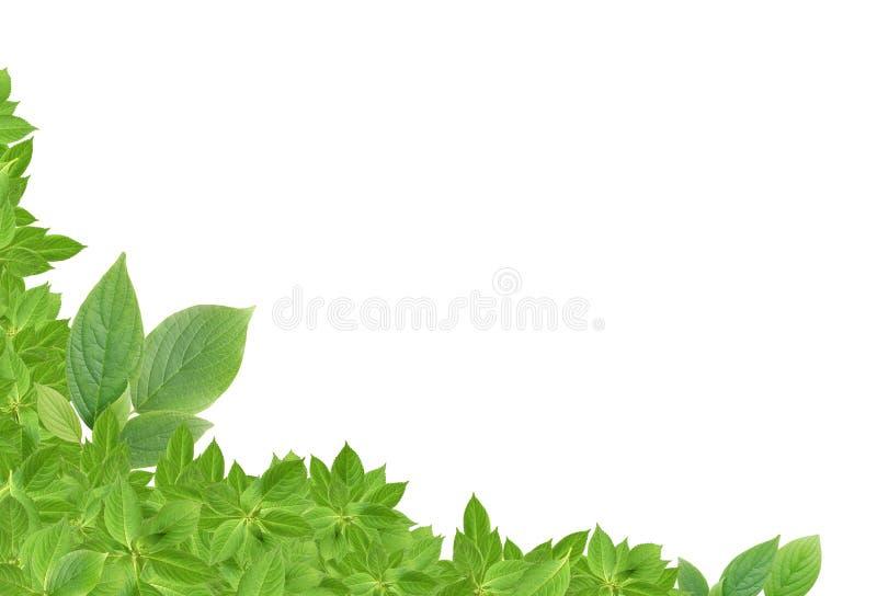 O verde deixa a beira foto de stock