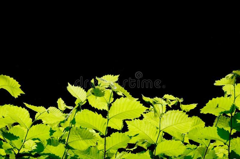 O verde deixa a beira imagens de stock