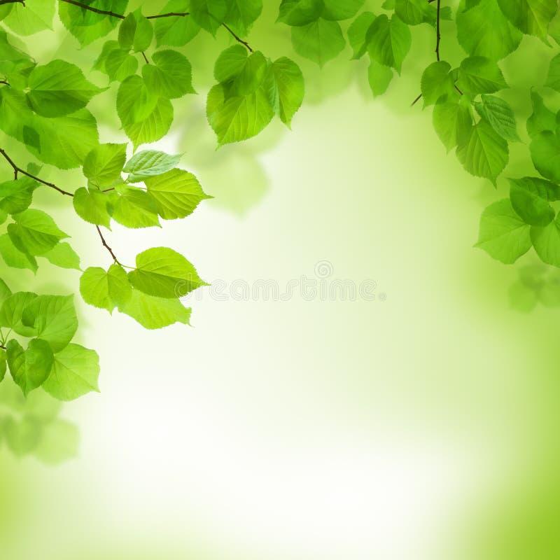 O verde deixa a beira, fundo abstrato fotografia de stock