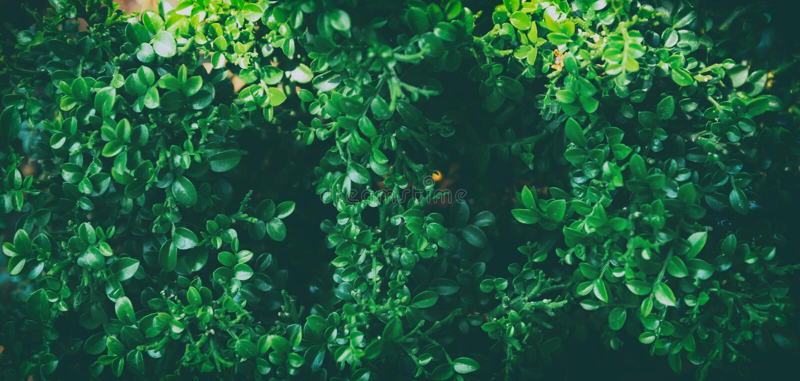O verde deixa criativo do conceito do fundo da natureza feito fotografia de stock royalty free