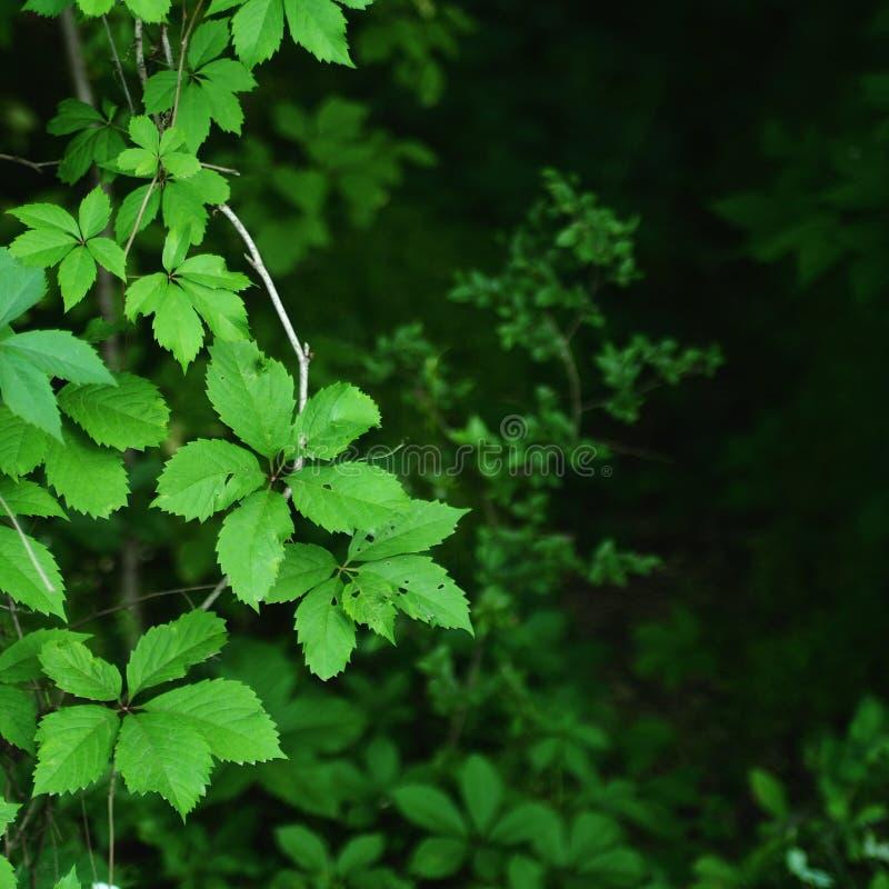 O verde deixa a folha sazonal fotos de stock