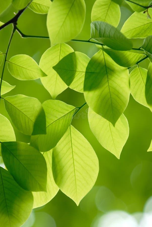 O verde deixa o backgroun do teste padrão fotografia de stock