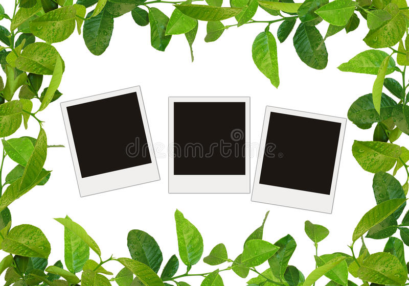 O verde deixa o frame ilustração stock
