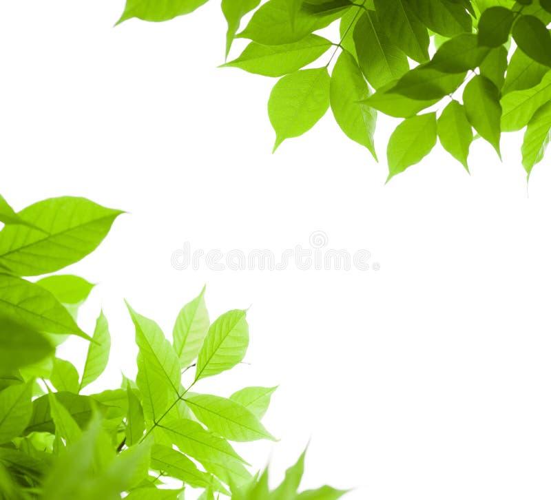 O verde deixa o fundo da natureza da beira fotografia de stock royalty free