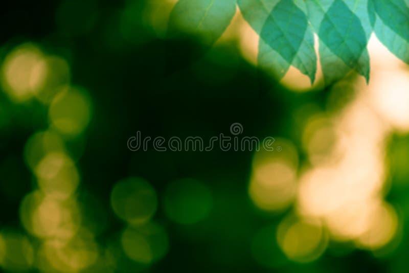 O verde deixa o fundo do bokeh foto de stock royalty free