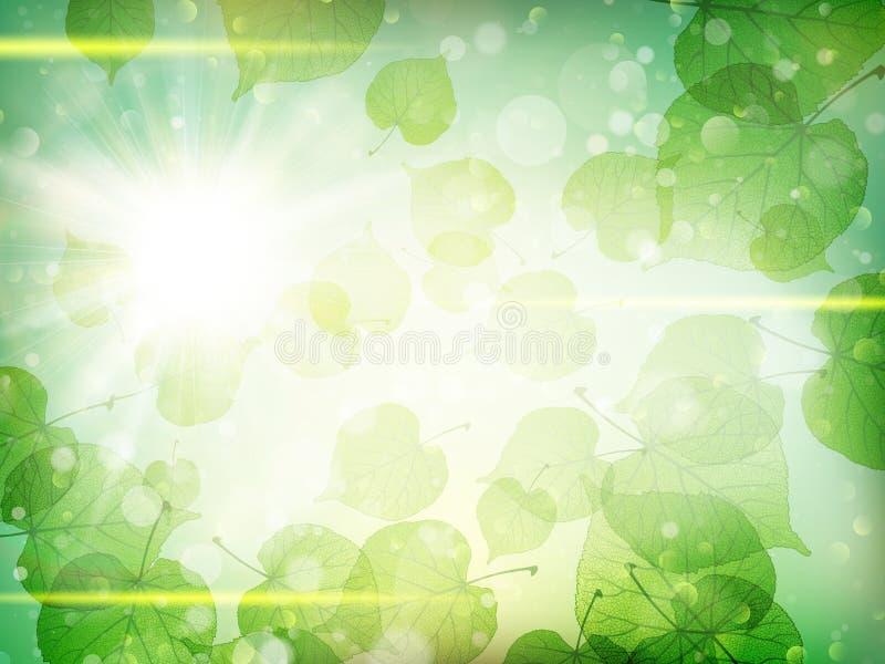 O verde deixa o fundo Eps 10 ilustração royalty free