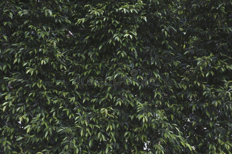 O verde deixa a parede imagens de stock royalty free