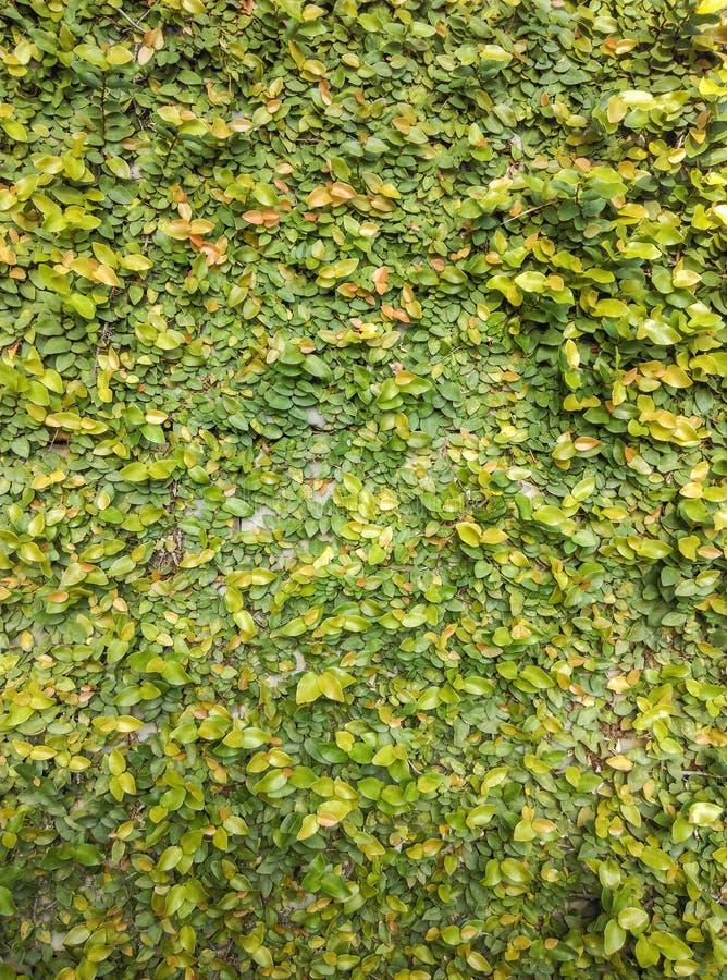 O verde deixa a textura imagens de stock