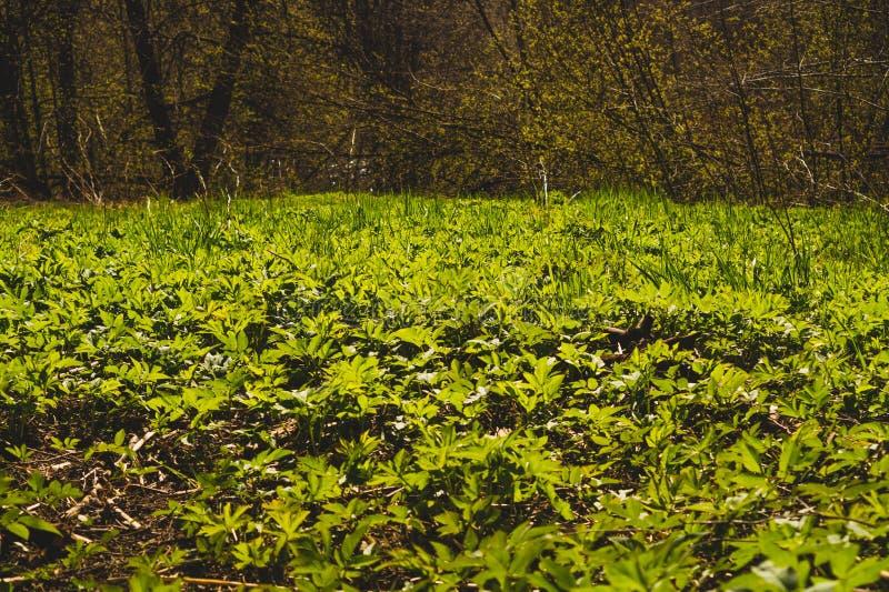 O verde deixa a textura Fundo da natureza das hortali?as fotografia de stock