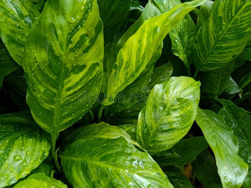 O verde deixa texturas na natureza, fundo da natureza, inclinação coloriu as folhas imagens de stock