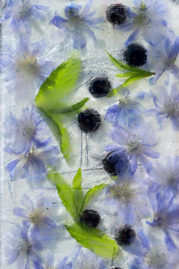 O verde do fundo sae da hortelã, da baga do mirtilo e da flor da chicória congelada no gelo fotografia de stock
