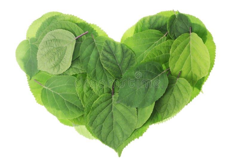 O verde do jardim deixa o coração foto de stock royalty free