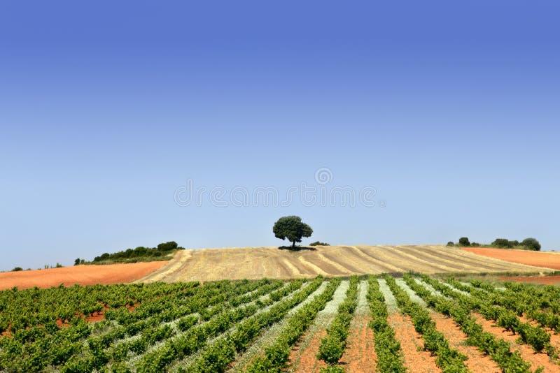 O verde enfileira o campo do vinhedo imagens de stock
