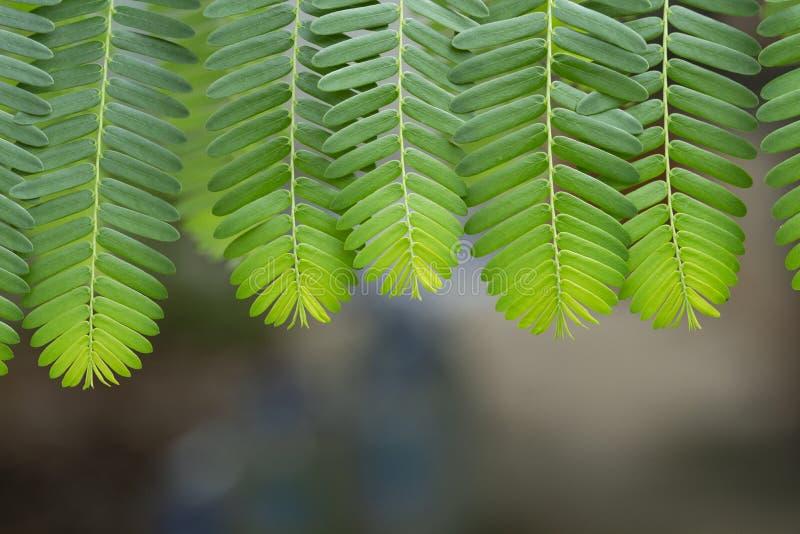 O verde fresco deixa o teste padr?o foto de stock royalty free