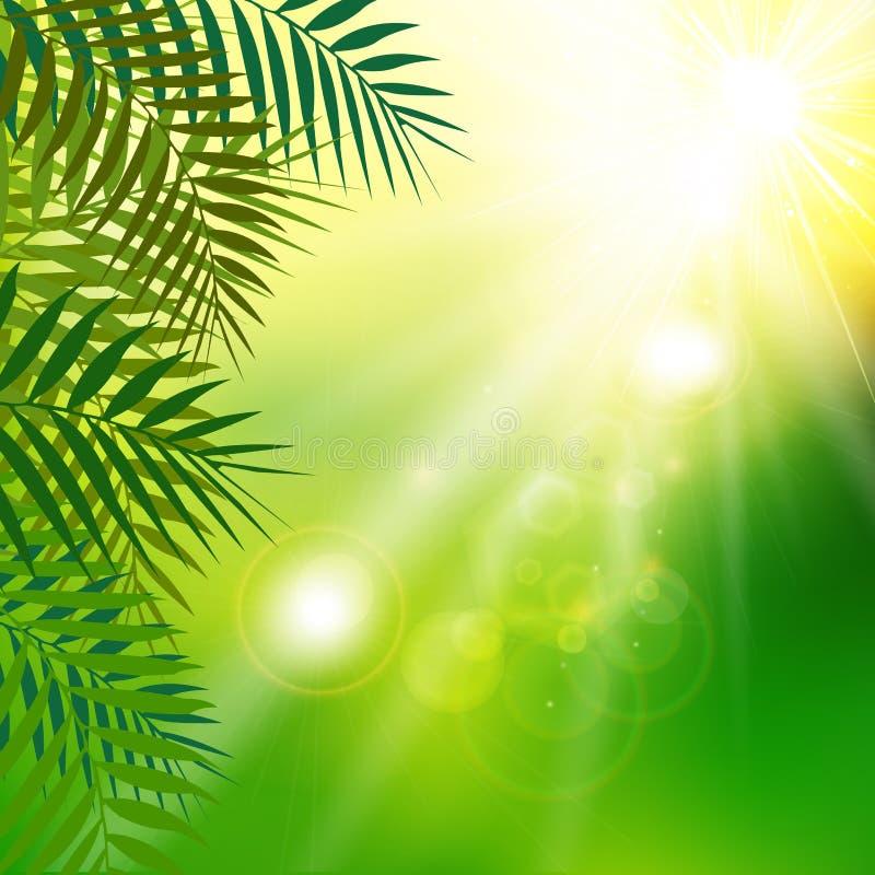 O verde fresco do verão sae com a luz solar no fundo natural ilustração stock