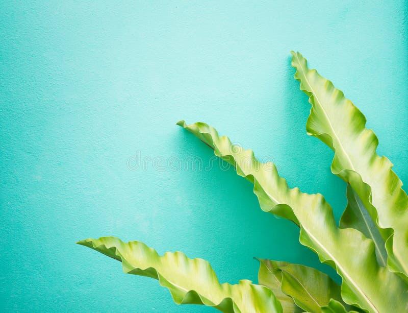 O verde longo brilhante deixa o modelo contra o fundo brilhante da parede verde Design de interiores, Botânica imagens de stock