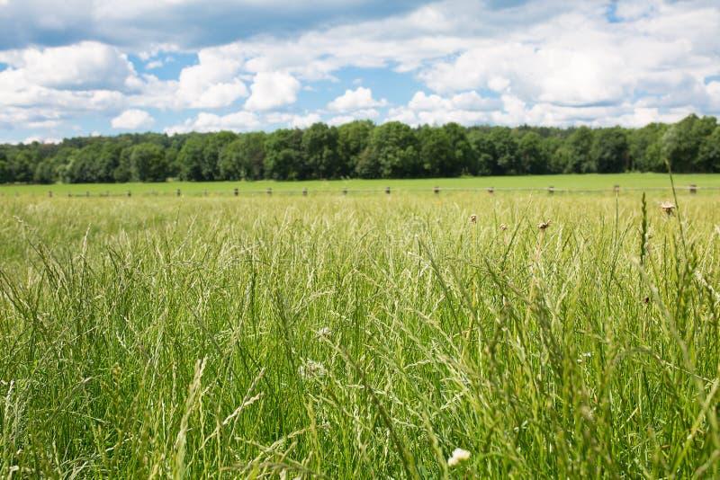 O verde pasta explorações agrícolas do cavalo Paisagem da mola do campo fotos de stock royalty free
