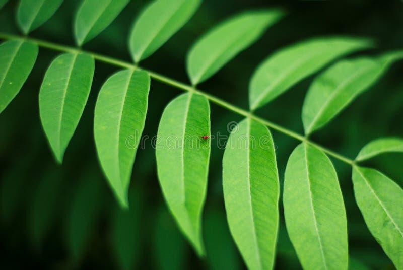 O verde reconfortante deixa o fundo com o inseto pequeno, beaut da natureza foto de stock