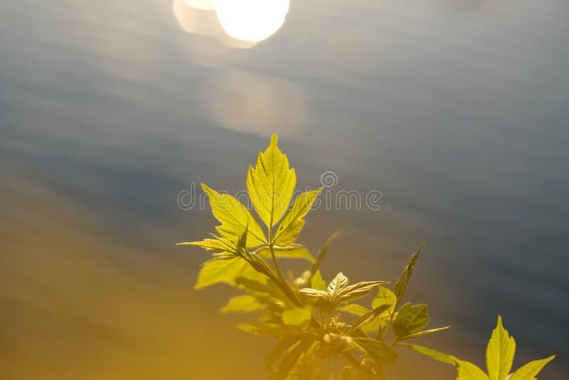 O verde sae à superfície da àgua foto de stock royalty free
