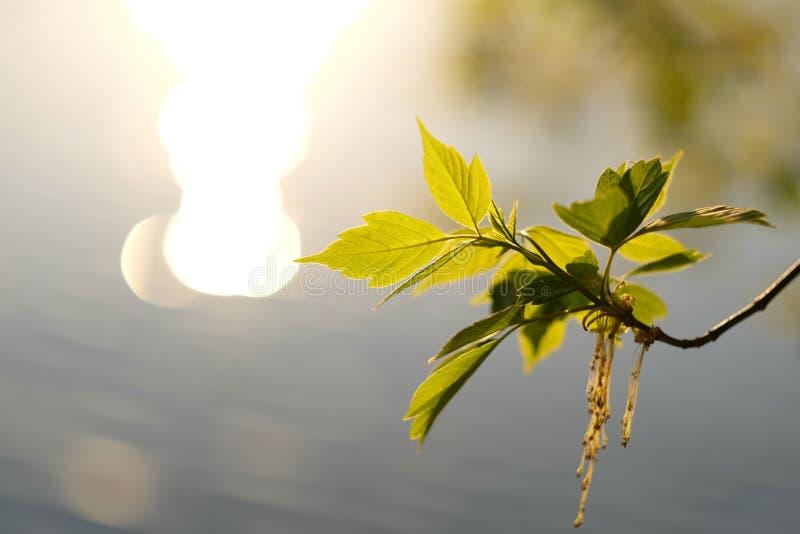O verde sae à superfície da àgua fotografia de stock royalty free