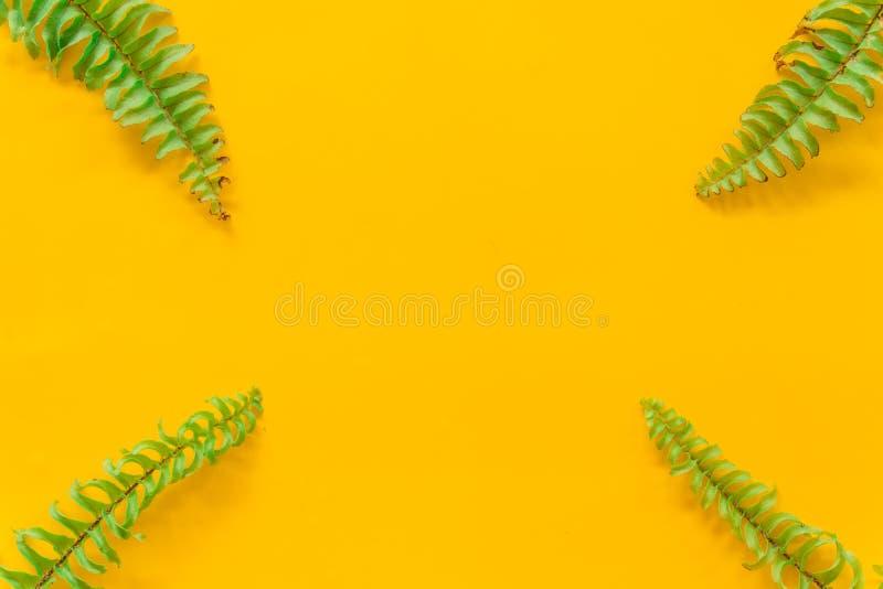 O verde sae m?nimo no fundo amarelo foto de stock