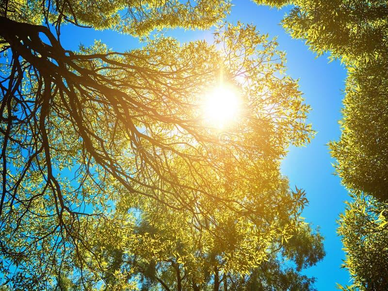 O verde sae na árvore e no sol em um céu azul fotos de stock
