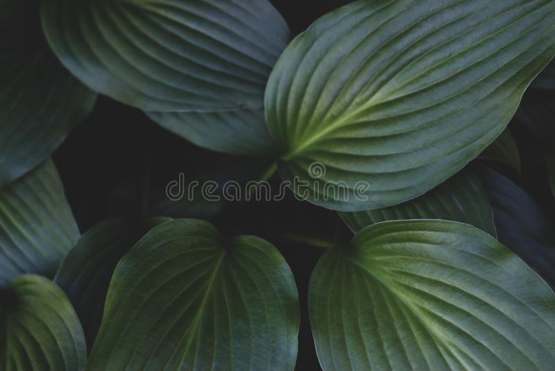 O verde tropical criativo deixa a disposi??o Conceito da natureza do vintage Baixa chave foto de stock royalty free